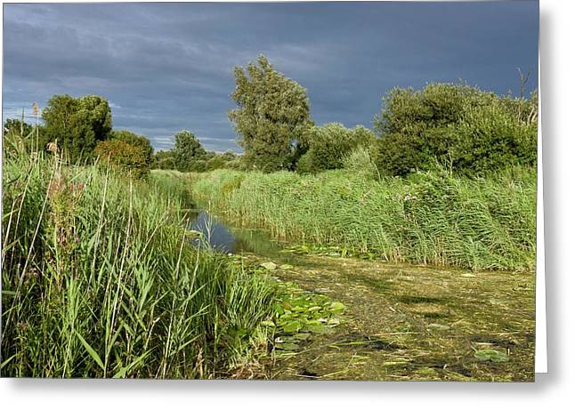 Ditch And Reedbeds Greeting Card by Bob Gibbons