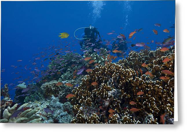 Diver And Schooling Anthias Fish Greeting Card