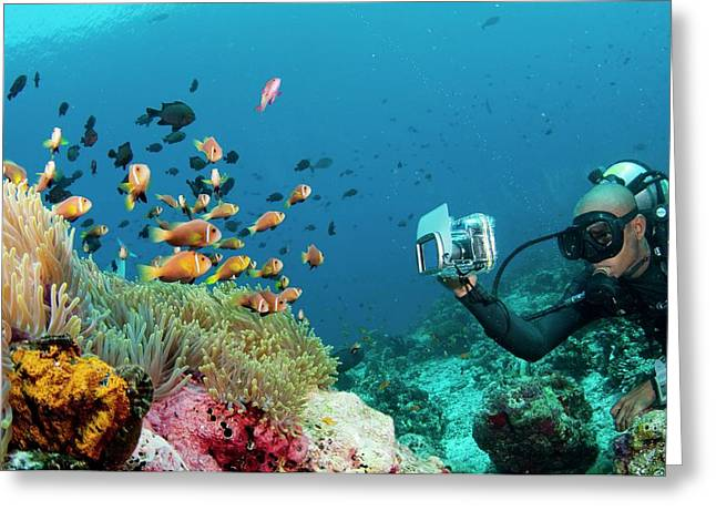 Diver Photographing Anemonefish Greeting Card by Scubazoo