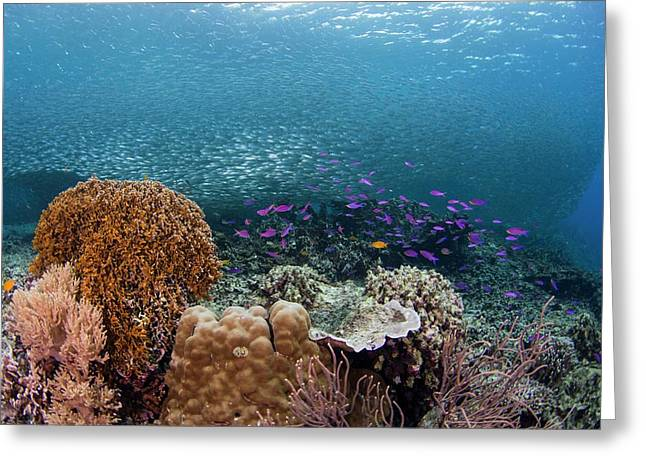 Diverse Coral Reef In The Philippines Greeting Card