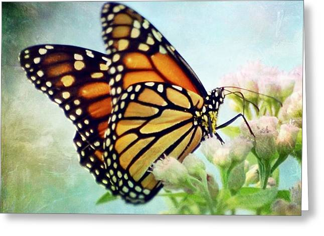 Greeting Card featuring the photograph Divine Things by Kerri Farley