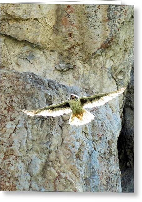Diving Falcon Greeting Card