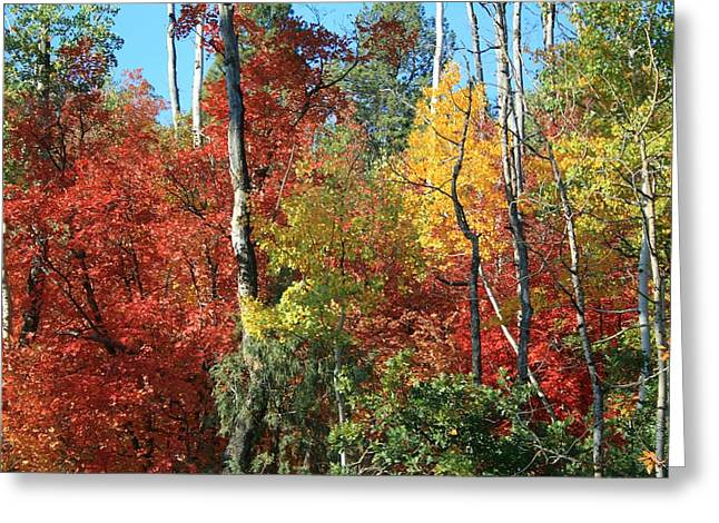Dixie Autumn Greeting Card