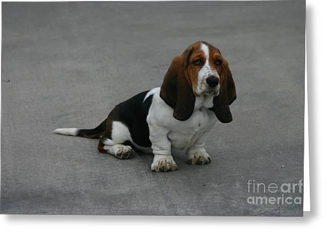 Dixie Big Paws Long Ears Greeting Card