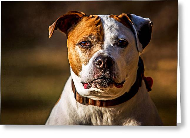 Greeting Card featuring the photograph Dixie Doodle The Pit Bull by Eleanor Abramson