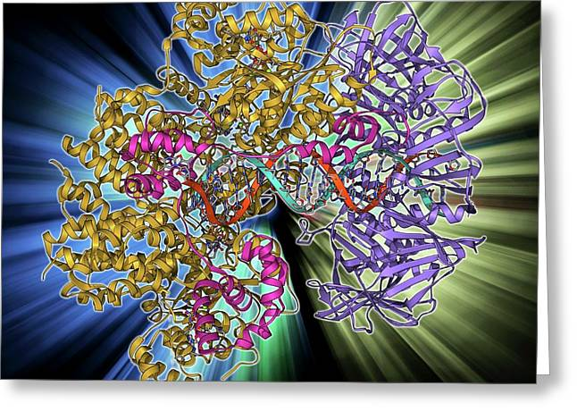 Dna Clamp Complexed With Dna Molecule Greeting Card