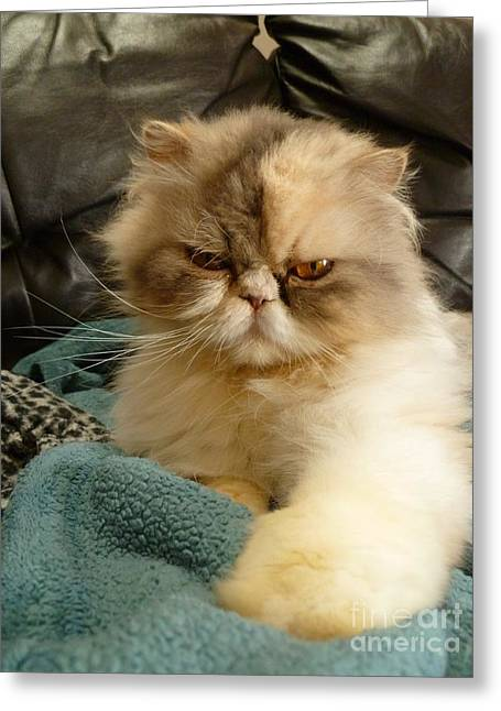 Greeting Card featuring the photograph Do I Look Amused? by Vicki Spindler