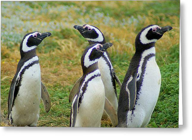 Do You Smell That - Penguins Greeting Card by DerekTXFactor Creative