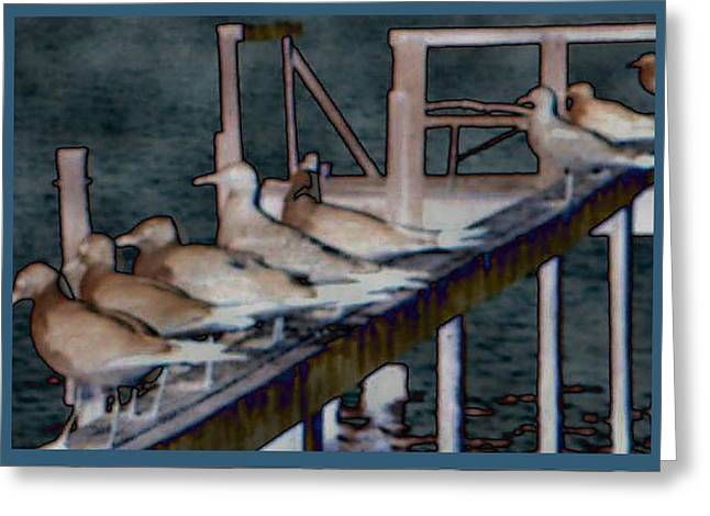 Dock Flock Greeting Card by Becky Sterling