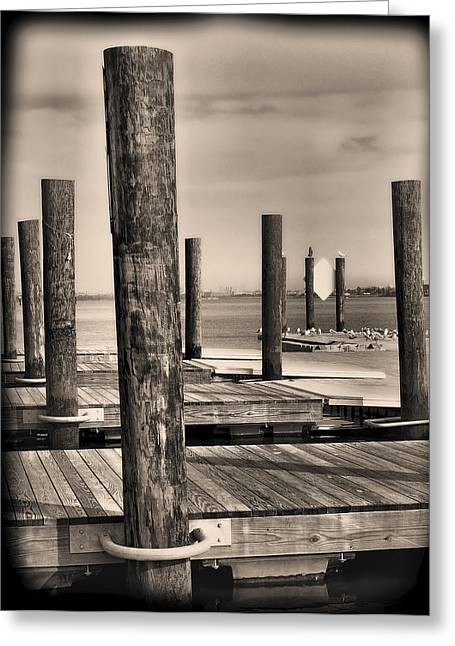 Dock Posts On The Potomac Greeting Card