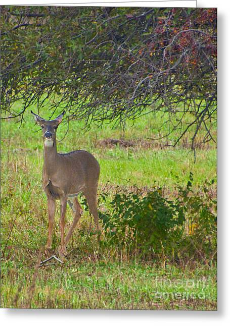 Doe A Deer Greeting Card