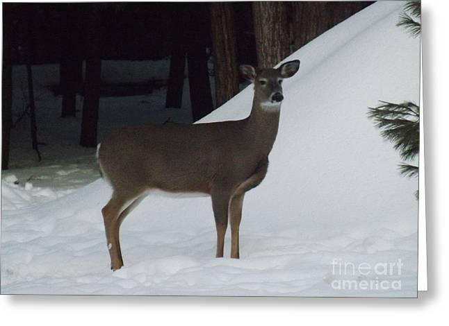Doe A Deer Greeting Card by Brenda Brown