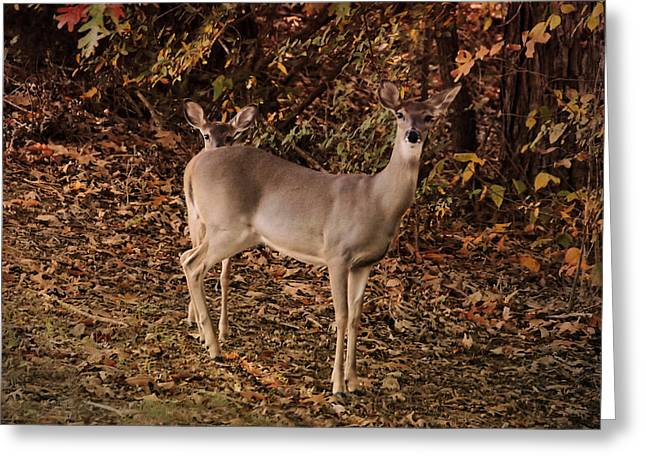 Doe And Fawn - Deer - Wildlife Greeting Card