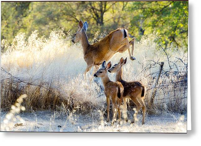 Doe And Fawns... Greeting Card