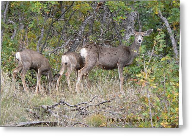 Doe And Two Fawns Greeting Card