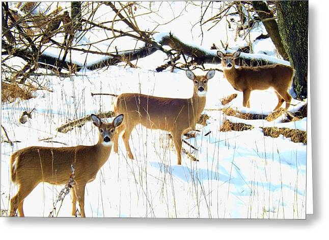 Does In The Snow Greeting Card