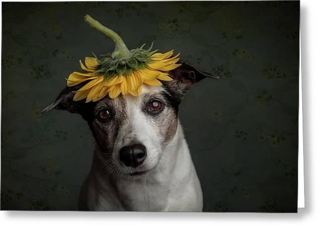 Does She Realize She Looks Like A Sunflower.... Greeting Card