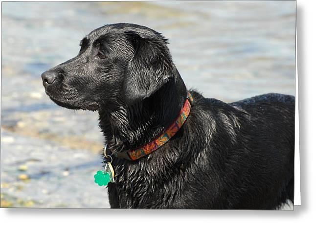Dog 132 Greeting Card by Joyce StJames