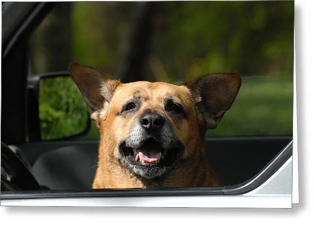 Dog 137 Greeting Card by Joyce StJames