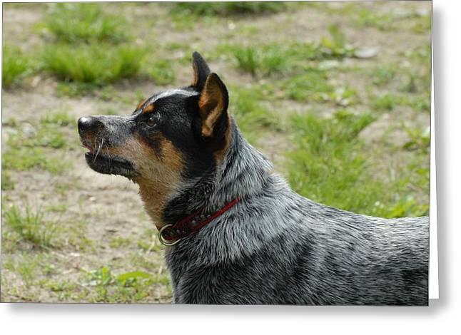 Dog 161 Greeting Card by Joyce StJames