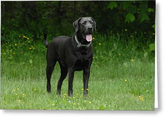 Dog 171 Greeting Card by Joyce StJames