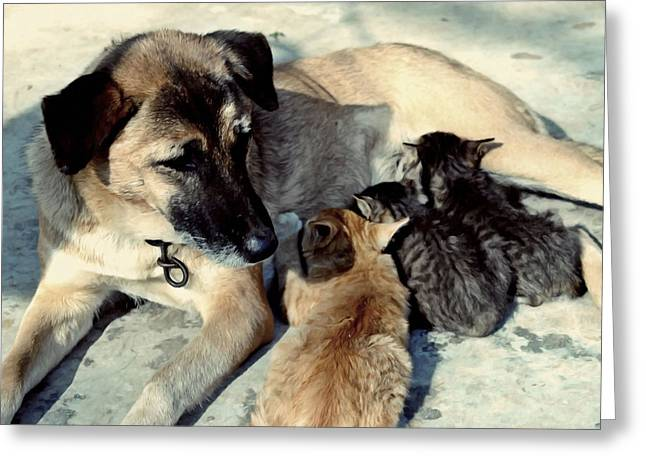 Dog Adopts Kittens Greeting Card by Lanjee Chee