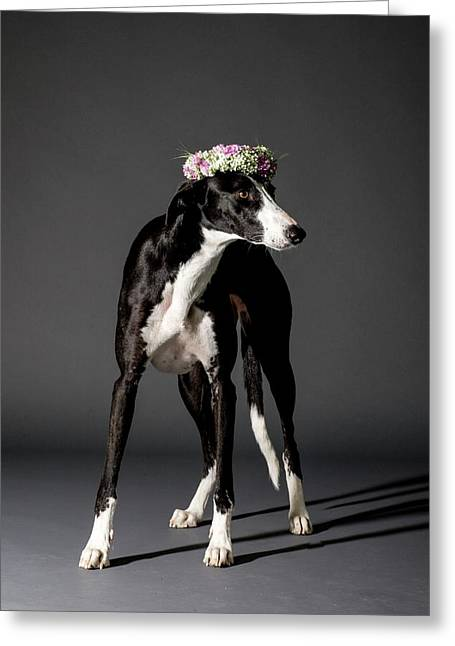 Dog And Flower Wreath Greeting Card