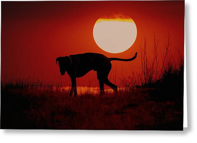 Dog At Sunset Greeting Card by Jana Thompson