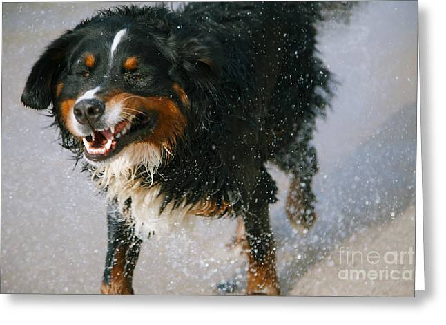 Dog Barking Greeting Card by Aleksey Tugolukov