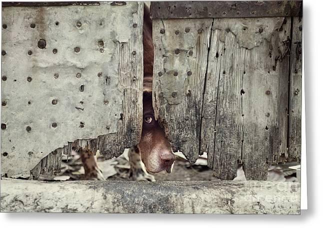 Dog Behind Door Greeting Card