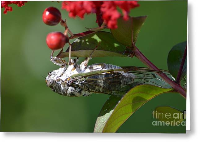 Dog Day Cicada Greeting Card by Kathy Gibbons