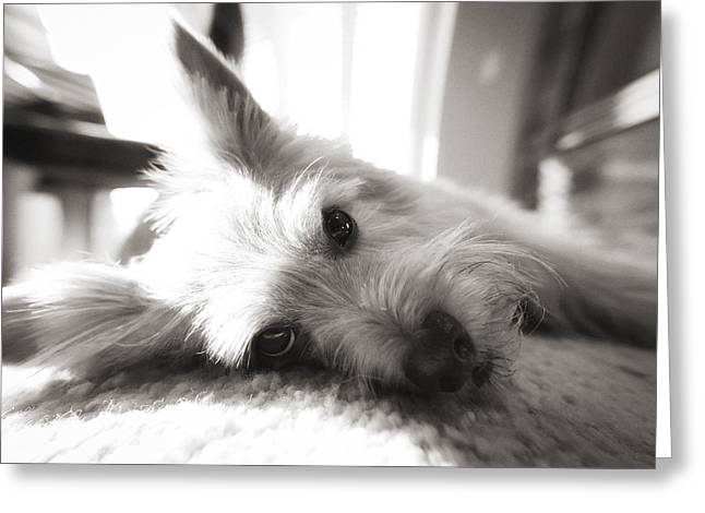 Dog Face Greeting Card by Susan Stone