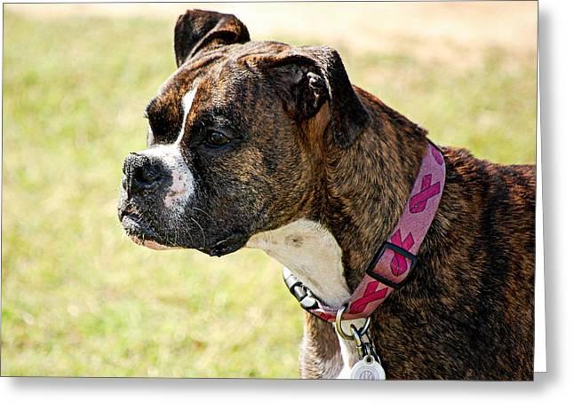 Dog Gone Pink Greeting Card by AJ  Schibig