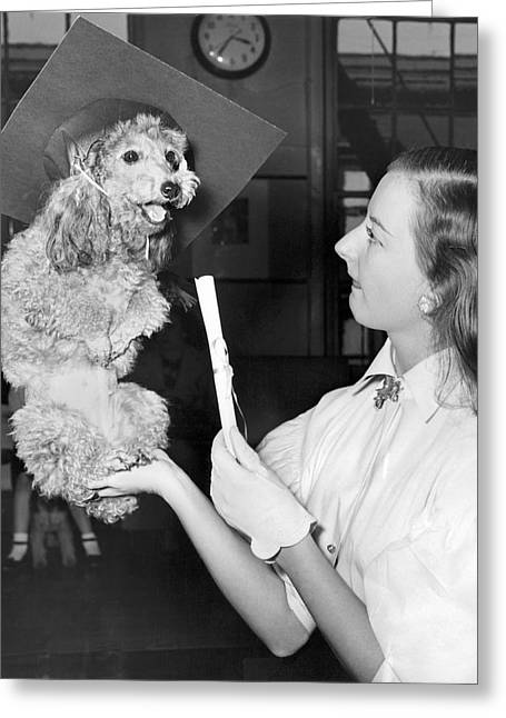 Dog Graduates From School Greeting Card by Underwood Archives