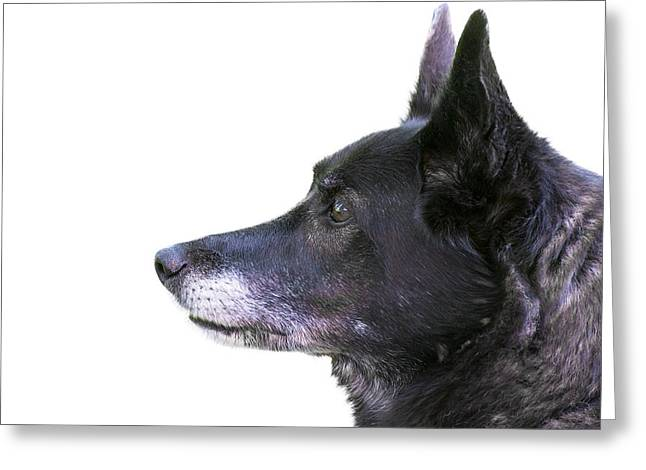 Dog Head Profile Isolated On White Greeting Card