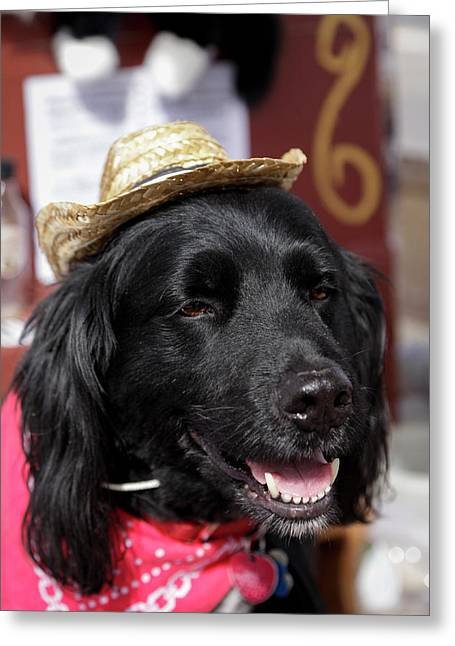 Dog In A Small Town Parade Greeting Card by Julien Mcroberts
