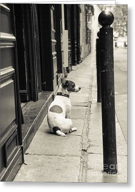 Dog In Paris Greeting Card by Diane Diederich