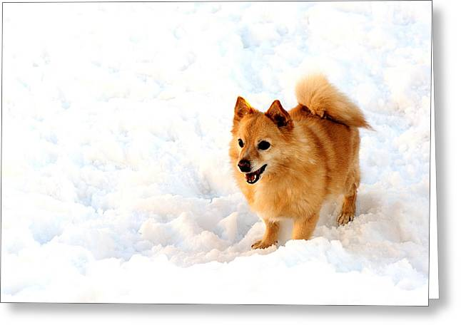 Dog In Snow Greeting Card by Marwan Khoury