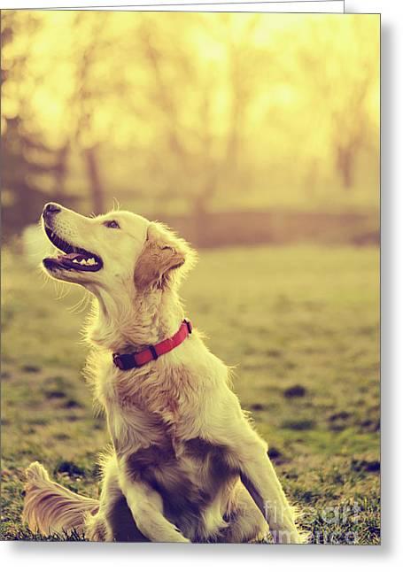 Dog In The Park Greeting Card by Jelena Jovanovic