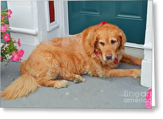 Dog In Waiting Greeting Card by Eva Kaufman