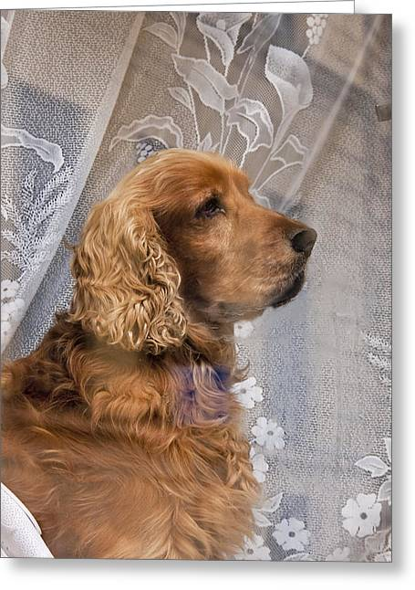Greeting Card featuring the photograph Dog In Window by Dennis Cox WorldViews