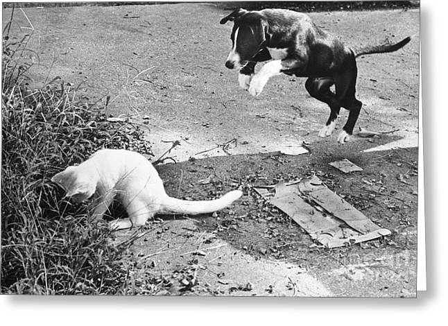 Dog Jumping On An Unsuspecting Kitten Greeting Card by Lynn Lennon