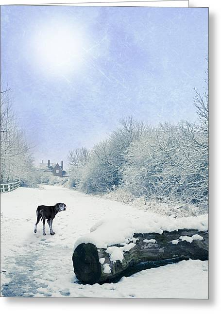 Dog Looking Back Greeting Card