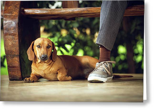 Dog Lying Down On Floor Under Table Greeting Card