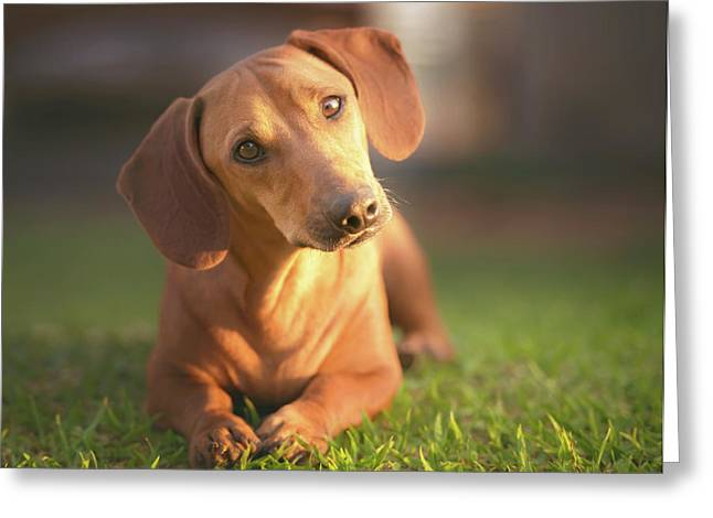 Dog Lying On Grass Greeting Card