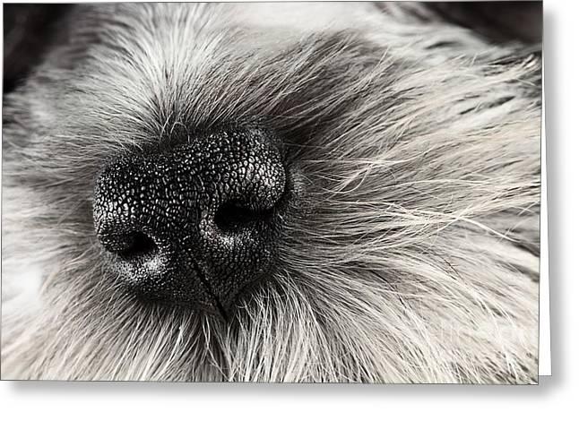 Dog Nose  Greeting Card