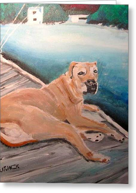 Dog On Dock Greeting Card by Michael Litvack