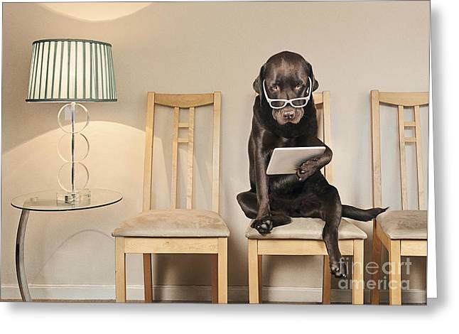 Dog On Ipad Greeting Card by Justin Paget