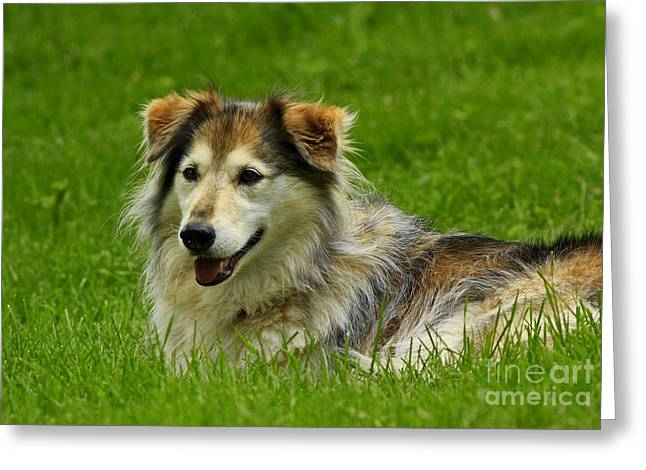Dog On It I'm Tired Greeting Card