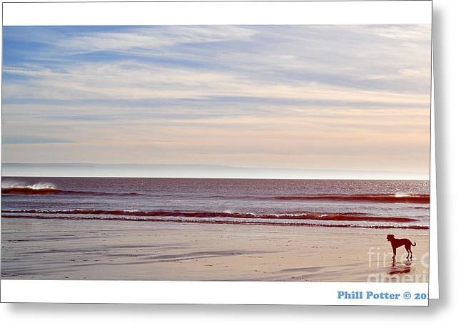 Dog On The Beach Greeting Card